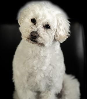 Cody cute dog at Cruikshank & Weber Orthodontics in Forest Grove Hillsboro, OR